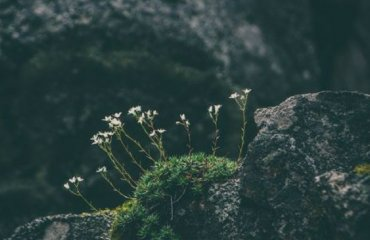 Dr. Jason Carthen: Dealing with the Rocks in our lives